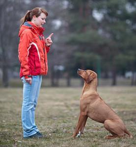Curso de obediencia canina df