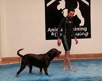 guardería canina DF