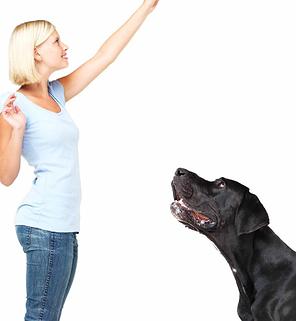 curso de obediencia canina en CDMX