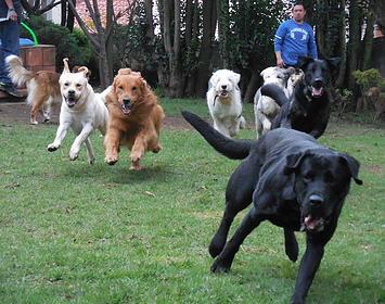entrenamiento para perros DF