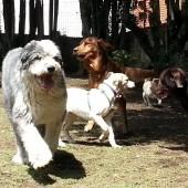 http://animaltraining.com.mx