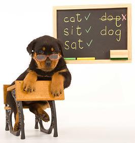 escuela para perros CDMX