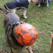 animaltraining.com.mx