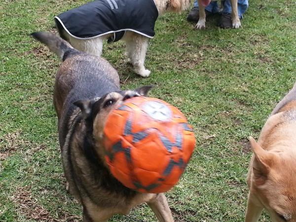adiestramiento canino DF