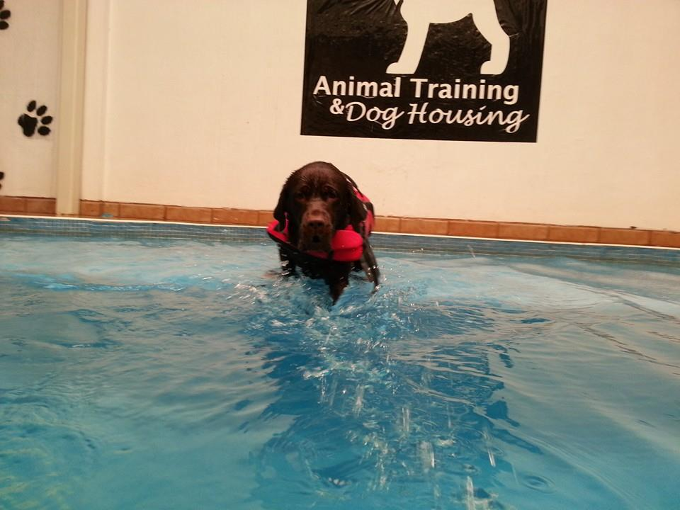 rehabilitacion canina en alberca