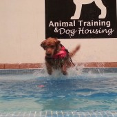 https://animaltraining.com.mx