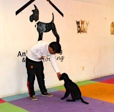 escuela para perros DF