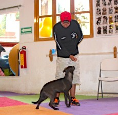 entrenamiento canino DF