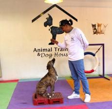 curso de obediencia canina en df