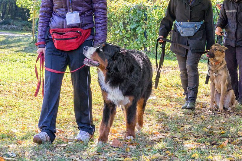 curso-de-obediencia-canina-en-df-compressor.jpg