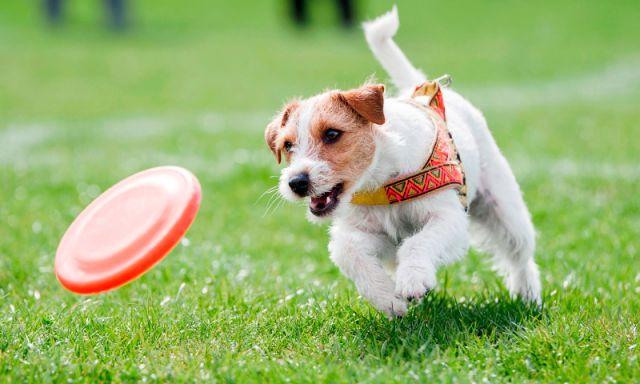 perro-corriendo-min.jpg