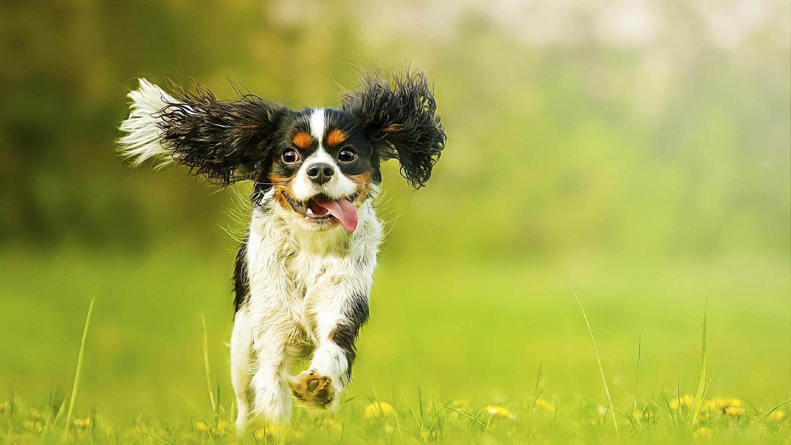 perro-corriendo-min1.jpg