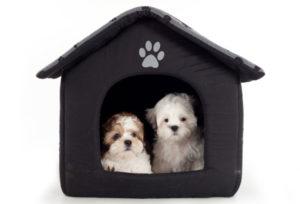 hotel para perros en CDMX