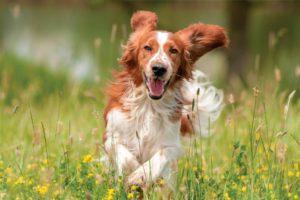 adiestramiento canino CDMX
