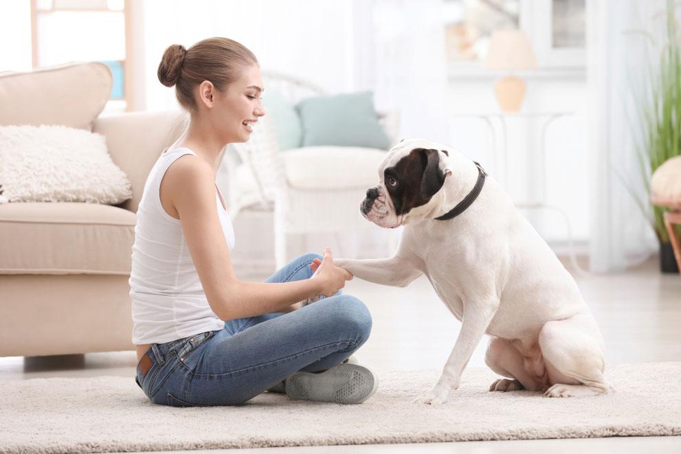 entrenamiento canino CDMX