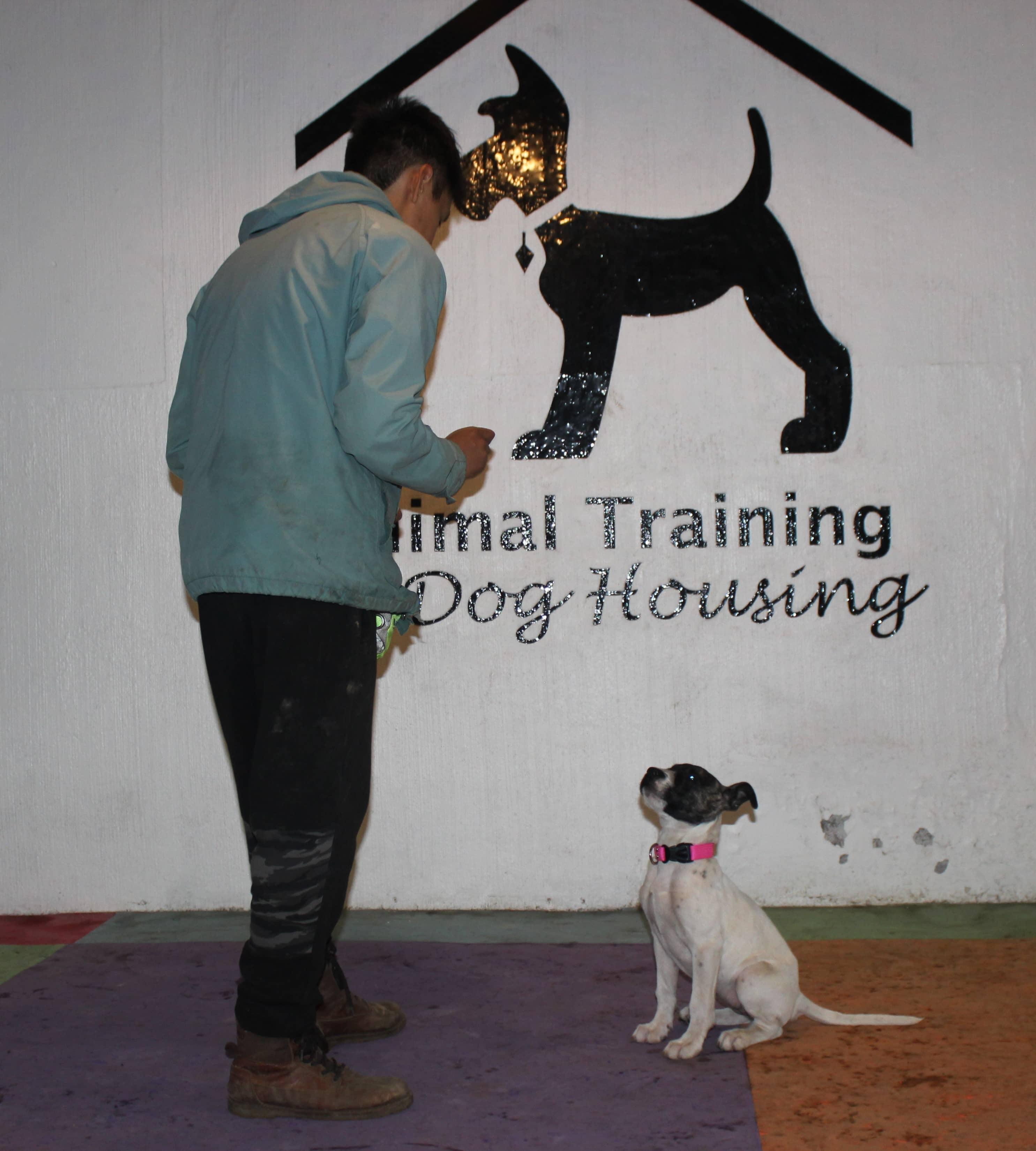 entrenamiento para perros cdmx
