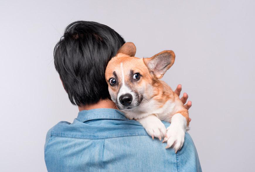 guardería canina en CDMX