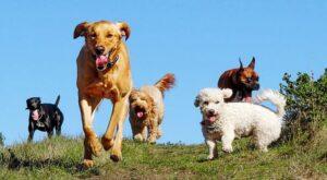 guardería para perros CDMX