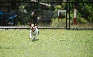 Gimnasio para perros CDMX