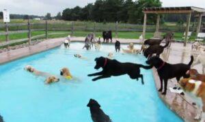 Fiesta de perros en alberca